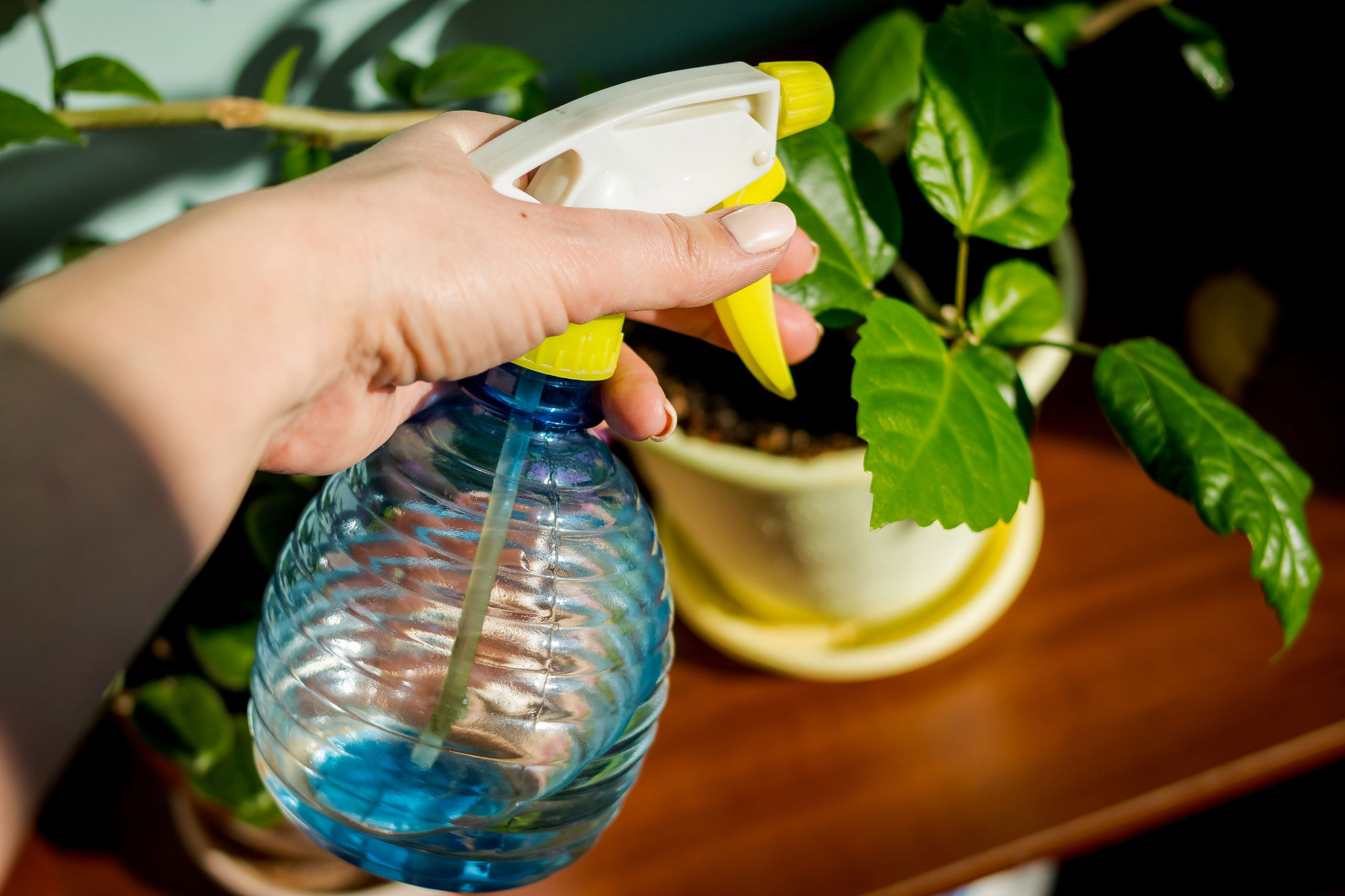vanne planter ferie tips hvordan vanning blomster